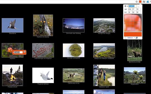 Chrome Web Store - Color Picker